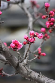 40 Ideas cherry blossom tree wallpaper spring for 2020 Beautiful Flowers, Beautiful Pictures, Cool Pictures, Deco Floral, Spring Blossom, Belle Photo, Spring Flowers, Mother Nature, Planting Flowers