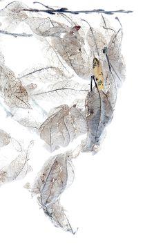 leaves in a webworm nest (mary jo hoffman)
