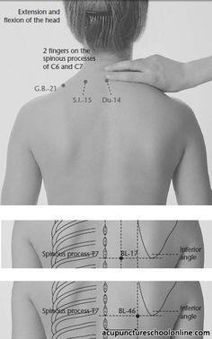 bl 23 meridian acupuncture - Google-søgning