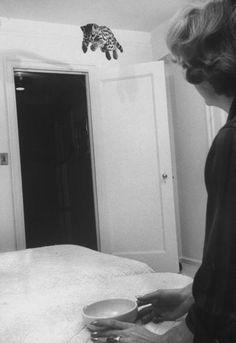 A pet ocelot - USA 1961