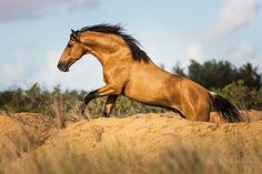 All The Pretty Horses, Beautiful Horses, Animals Beautiful, Horses And Dogs, Wild Horses, Horse Photos, Horse Pictures, Majestic Horse, Horse World