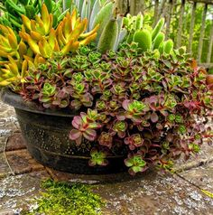 Container gardens are a great was to accessorize the outdoors.