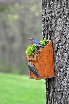 I love Bluebirds
