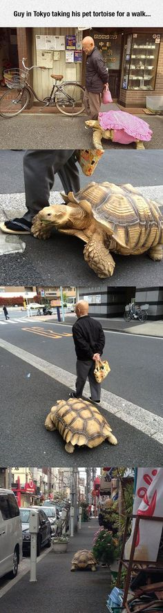 This Tortoise Has Been Alive For Years Tortoise Turtle And - Man walks pet tortoise through tokyo