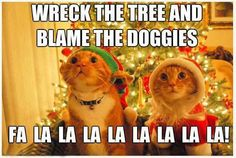 Funny Christmas Kitties! :D