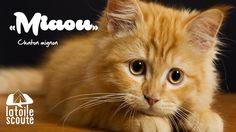 """""""Miaou"""" - Chaton mignon #citation #scout"""