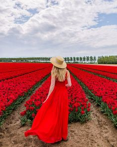 This tulip field looks like a Red Sea of tulips! I found it in Eiland Goeree Overflakkee in the Netherlands. I was ready to blend into the decor with my red dress! Tulip Fields, Red Tulips, Red Sea, Life Is Beautiful, Lady In Red, Netherlands, Holland, Floral, Pretty