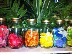 Storing and Organizing Prima Flowers