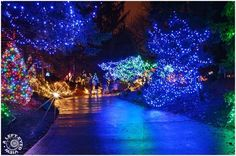 Here are some places you can find wonderful holiday light displays to brighten up your holidays.