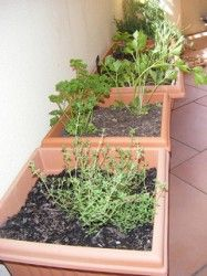 How to Successfully Grow Herbs Indoors