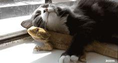 Sin importarles el color o la textura de su piel. | 16 Razones por las que los gatos son los amigos ideales