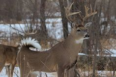 Photo: Handsome buck blends in with the woods