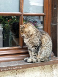 Old cat sitting in the window waiting to go inside.
