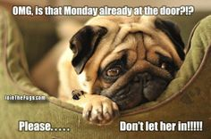love it!! just how am feeling today! hate mondays :(