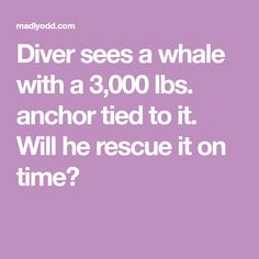 Diver sees a whale with a lbs. anchor tied to it. Will he rescue it on time? Awesome Stories, Anchor, Whale, Tie, Anchors, Cravat Tie, Whales, Ties, Anchor Bolt