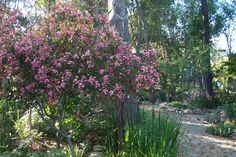 Yard and Garden Secrets: Gardens Small to Large Photo Gallery Large Photos, Small Trees, Small House Plans, Patio Design, Curb Appeal, Bonsai, Gardening Tips, Photo Galleries, Home And Garden