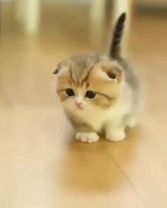 Funny Cute Cats, Cute Cat Gif, Cute Cats And Kittens, Cute Funny Animals, Kittens Cutest, Funny Kittens, Baby Animals Super Cute, Cute Baby Dogs, Cute Little Animals