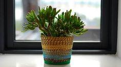 5 plantas que a Nasa recomenda para purificar o ar da sua casa - BBC Brasil