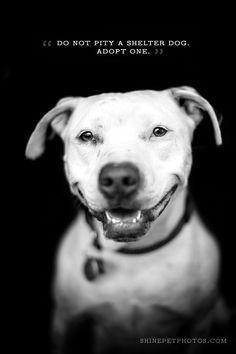 pet adoption graphic design - Google Search