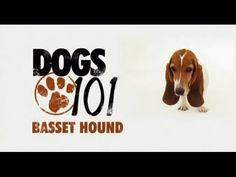Basset Hound Dogs 101, Bassett Hound, Vizsla, Just Love, Creatures, Pets, Youtube, Animals, Animales