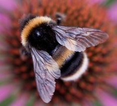 Bee Pictures, Cool Pictures, Birthday Month Flowers, Animals Beautiful, Cute Animals, Humble Bee, Bee Drawing, Bee House, I Love Bees