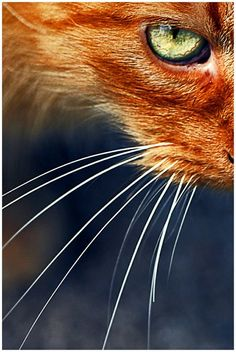 cat eye and whiskers - it's all about color and composition