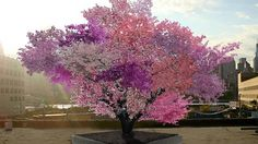 An artists rendering of the Tree of 40 Fruit, grafted together by Sam Van Aken to bear 40 different kinds of fruit.