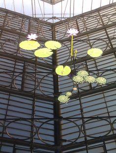 New water lilies at Kew