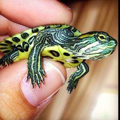 Sweetest little tiny guy <3