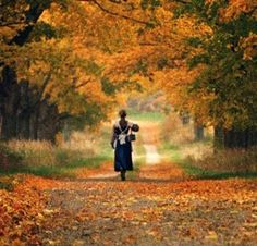 A scene from Anne of Green Gables...maybe this is why I like these kinds of roads so much!