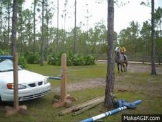 But when it comes to horsepower… | 6 GIFs Of Horses Jumping Cars
