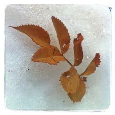 More photo's from the past 40 days. More Photos, Leaf Tattoos, The Past, Leaves, Snow, Winter, Day, Winter Time, Human Eye