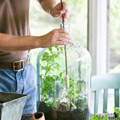 Before diving into terrarium plants, it's important to know if you're creating a terrarium or an open container garden. While many say they're synonymous, that isn't quite the case. A terrarium is a closed container that produces its own humidity and moisture due to its controlled environment.