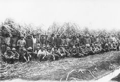 Australian South Sea Islander cane cutters on a sugar cane plantation in Queensland, c. 1900 | State Library of Queensland Flickr