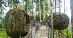 dusun-bambu-bird-nest.jpg (1200×628)