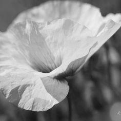 09:46 #photo #photography #picture #flowers #flowerslovers #flowersofinstagram #softfocus #flowerzdelight #tv_closeup #flowersandmacro #ig_bw_flowers #bnwbutnot #foto_blackwhite #ig_global_bw #ig_artistry #pasandha__bw #monochrome #blackandwhite #bnw #bnwrome_details #ig_baoli #bnwmood #bnw_umbria #lovelydeadcrap #lumixg6 #sigma #tv_monotones #createcapture_bnw #japan #sapporo