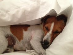 It's cosy here under the pillows