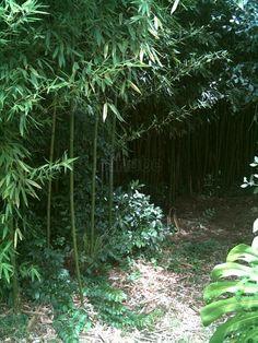 Arboretum Lussich, Punta del Este, Maldonado. A botanical garden of international significance.