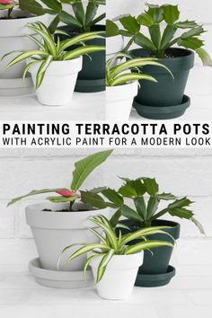 Learn how to paint terracotta pots, including the best paint for terracotta pots to help give inexpensive terracota pots a more polished, modern look. Painted Plant Pots, Painting Terracotta Pots, Diy Planters, Planter Boxes, Cool Paintings, Indoor Garden, Indoor Plants, Repurpose, Reuse