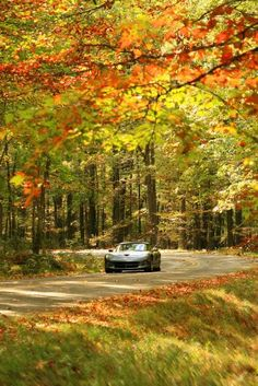 Drivers take a fall drive though McKean County in the Allegheny National Forest.