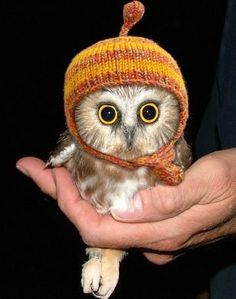 Winter Gryffindor owl