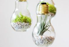 Having fun with light bulbs? Well that might sound kind of strange, but in the DIY world any material can be used, transformed and reinterpreted.The classical light bulb has been for some time now … Light Bulb Terrarium, Terrarium Diy, Terrariums, Light Bulb Plant, Light Bulb Crafts, Old Lights, Terrace Design, Terrace Ideas, How To Make Light