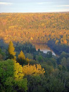 Latvia has the 4th highest proportion of land covered by forests in the European Union