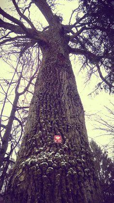 lasy Puszczy Piskiej w Mazurskim Parku Krajobrazowym obok Siedliska na Wygonie na Mazurach  #mazury #las #puszcza #spacer #nawygonie #siedlisko #mazurski #park #krajobrazowy #masuria #forest #landscape #park #foto