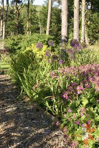 Scottish woodland planting design