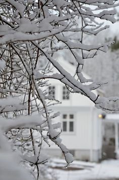 snow laden branches