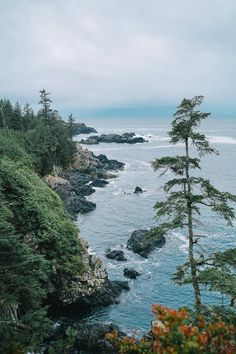 Whether you're a surfer or just looking to take in wilderness in the most beautiful way, I'm sharing my Tofino travel guide over on TVOB today! Canada Travel, Asia Travel, Places Around The World, Around The Worlds, West Coast Canada, Ireland Travel, Galway Ireland, Cork Ireland, Ireland Vacation