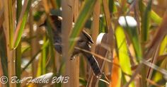 Birding Trip Report: Kameelfontein with Rihann Geyser and Ben Fouche.