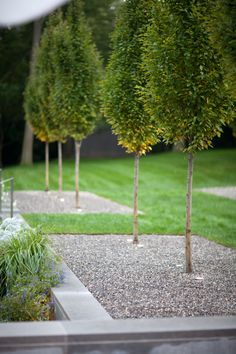 Doyle Herman Design Associates Landscape Design modern garden clean lines in the landscape row of trees pyramidal hornbeams trees in gravel Modern Landscape Design, Modern Garden Design, Garden Landscape Design, Landscape Plans, Modern Landscaping, Contemporary Landscape, Landscaping Plants, Landscape Architecture, Landscaping Design