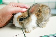 How to Raise a Healthy Bunny (with Bunny pictures!) -- via wikiHow.com #spring #Easter